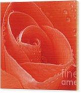 A Single Bloom 3 Wood Print