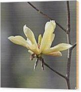 A Single Bloom Wood Print