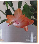 A Single Blossom Wood Print