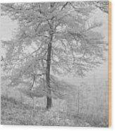 A Single Infrared Beech Tree Wood Print