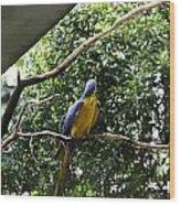 A Single Macaw Bird On A Branch Inside The Jurong Bird Park Wood Print
