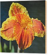 A Single Orange Lily Wood Print