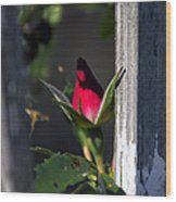 A Single Rosebud Wood Print