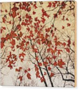A Skyward View Of The Bare Branches Wood Print