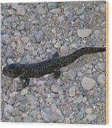 A Slow Salamander  Wood Print