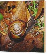 A Slow Snail Wood Print