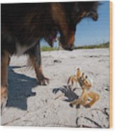 A Small Dog Fights With A Crab Wood Print