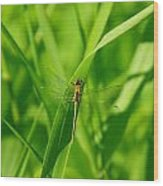 A Small Dragonfly Wood Print