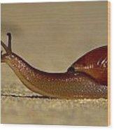 A Snails Pace Wood Print