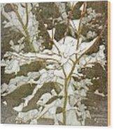 A Snowy Tree Wood Print