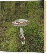 A Sole Mushroom Wood Print