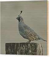 A Sole Rooster Quail Wood Print