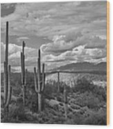 A Sonoran Winter Day In Black And White  Wood Print