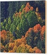 A Splash Of Color Wood Print