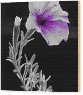 A Splash Of Purple Wood Print
