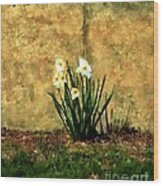 A Spot Of Spring Wood Print