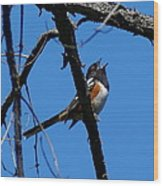 A Spotted Towhee Mid-song Wood Print