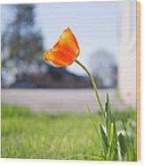 A Spring Tulip Wood Print
