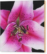 A Star Is Born - Pink Stargazer Lily By Sharon Cummings Wood Print by Sharon Cummings