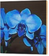 A Stem Of Beautiful Blue Orchids Wood Print