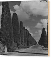 A Street Lined With Cypress Trees Wood Print