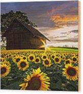 A Sunflower Moment Wood Print