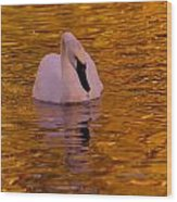 A Swan On Golden Waters Wood Print
