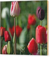 A Tapestry Of Tulips Wood Print