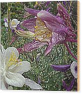 a taste of dew i do and PCC  garden too     GARDEN IN SPRING MAJOR Wood Print by Kenneth James