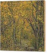 A Teton Autumn Wood Print