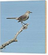 A Texas Mockingbird Wood Print by Rebecca Cearley