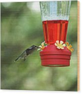 A Tiny Little Ruby-throated Hummingbirds Wood Print