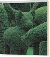 A Topiary Bear In Alice Braytons Green Animals Wood Print