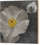 A Touch Of Color - Poppy Wood Print