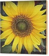 A Touch Of Sunshine - Sunflower Wood Print