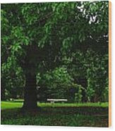 A Tree And A Bench Wood Print