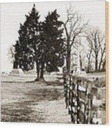 A Tree Grows In Gettysburg Wood Print