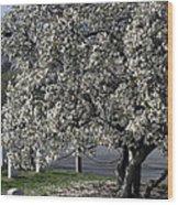 A Tree In Arlington Wood Print