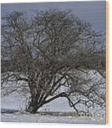A Tree In Canaan 2 Wood Print