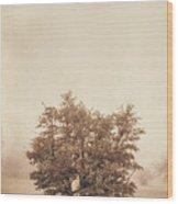 A Tree In The Fog Wood Print