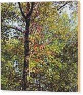 A Tree's Life Wood Print
