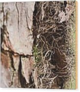 A Treetrunk Abstract Wood Print