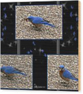 A Typical Eastern Bluebird's Lunch - Featured In Comfortable Art Group Wood Print