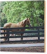 A Very Beautiful Hilton Head Island Horse Wood Print
