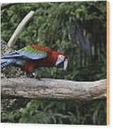 A Very Colorful And Bright Macaw Bird Perched On A Branch Wood Print