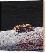 A Vespid Wasp  Wood Print