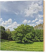 A View From Burrow Mump Wood Print