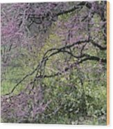 A View Of A Blooming Redbud Tree Wood Print