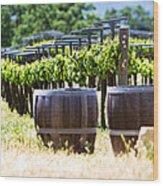A Vineyard With Oak Barrels Wood Print