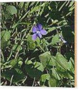 A Violet Wood Print